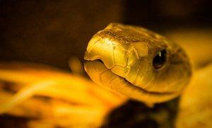Snake-poison