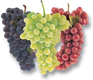 Grapes_69145721_std
