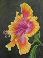 Hibiscus-lg