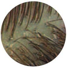 Normal-scalp