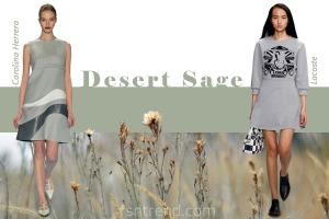 12-modnye-cveta-osen-zima-desert-sage