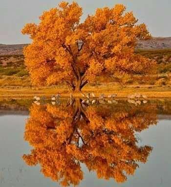 cf781a7c21e4ca933f4313f225bd4eb3--autumn-trees-fall-leaves